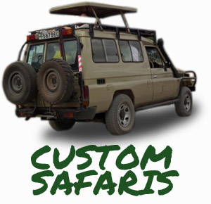 Custom Safaris Link